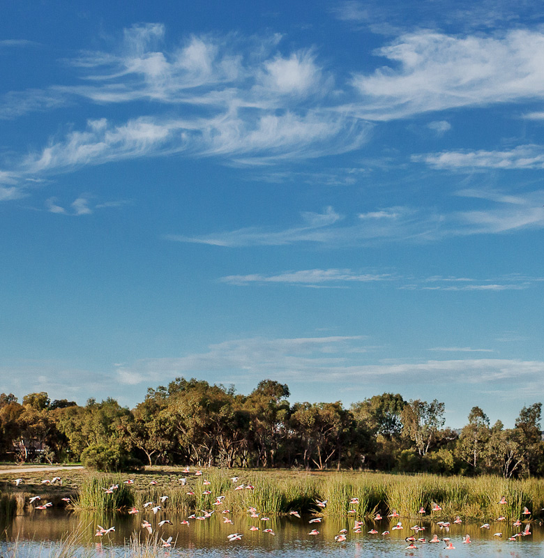 Andrews Farm Wetland