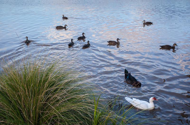 Munno Para wetland